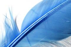蓝色羽毛细节 图库摄影