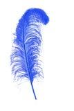 蓝色羽毛 免版税库存照片
