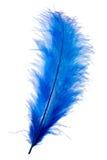 蓝色羽毛 库存图片