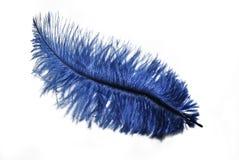 蓝色羽毛 库存照片
