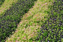 蓝色翼花园  免版税图库摄影