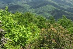 蓝色背脊山的视图 图库摄影