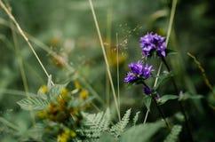 蓝色自然花在绿色森林里 免版税库存图片