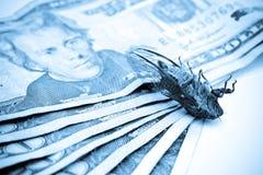 蓝色臭虫货币 库存照片