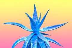 蓝色芦荟 美术画廊时尚设计 最小 免版税图库摄影