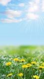 蓝色花使wity黄色环境美化 库存图片