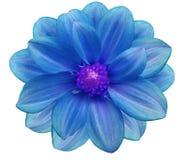 蓝色花园,白色隔绝了与裁减路线的背景 特写镜头 免版税库存图片