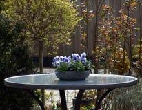 蓝色花园 免版税库存图片