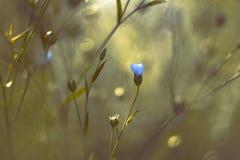 蓝色花在一个不可思议的庭院里 免版税图库摄影