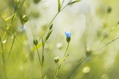 蓝色花在夏天庭院里 免版税库存图片