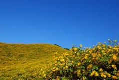 蓝色花天空黄色 库存照片