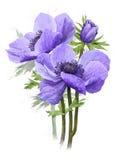 蓝色花束开花弹簧 免版税库存照片