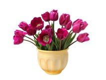 蓝色花束查出鹦鹉紫色郁金香种类白色 免版税库存图片