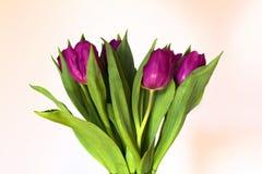 蓝色花束查出鹦鹉紫色郁金香种类白色 免版税库存照片