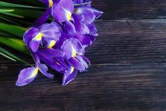 蓝色花束幻想虹膜 库存照片