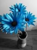蓝色花束 免版税库存照片