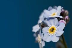 蓝色花森林春天 库存照片