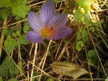 蓝色花用某一桔子 库存图片