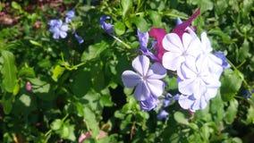 蓝色花的亮光 免版税库存照片