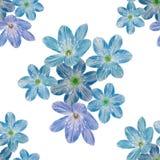蓝色花的无缝的植物的样式 向量例证