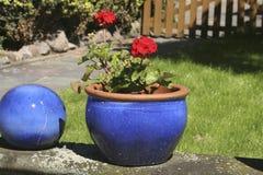 蓝色花盆红色 免版税库存图片