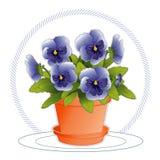 蓝色花盆蝴蝶花天空 库存图片