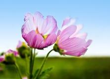 蓝色花紫色天空 免版税库存照片