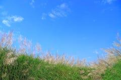 蓝色花草天空 库存照片