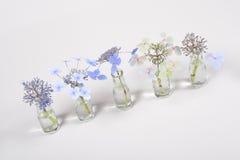 蓝色花行在玻璃瓶子的,从凋枯的绽放的周期在白色背景 库存图片