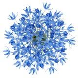 蓝色花顶视图在白色查出的花瓶的 免版税库存图片