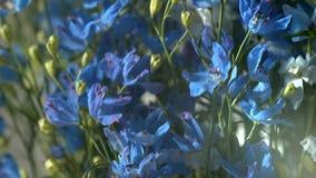 蓝色花-图象 库存图片