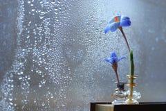 蓝色花临近湿窗口 免版税库存照片
