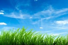 蓝色草天空 库存图片