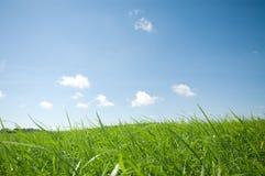 蓝色草天空 库存照片