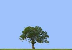 蓝色草甸天空结构树 免版税库存照片