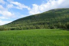 蓝色草绿色天空 免版税库存照片