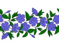 蓝色荔枝螺的无缝的样式 有长春蔓花的诗歌选 花卉典雅的装饰品 不尽的边界 免版税库存图片