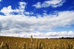 蓝色萨罗普郡天空 库存图片