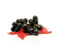 蓝色葡萄叶子红色 免版税库存图片