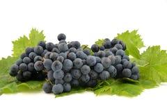 蓝色葡萄和明亮的葡萄叶子 免版税库存照片