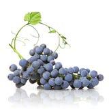 蓝色葡萄绿色查出的叶子 免版税库存照片