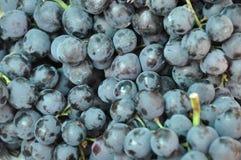 蓝色葡萄 免版税库存图片