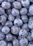 蓝色蓝莓垂直 免版税库存照片