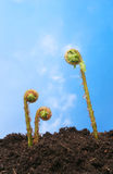蓝色蕨叶状体天空 免版税库存照片