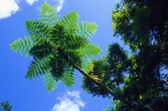 蓝色蕨天空结构树 免版税库存照片