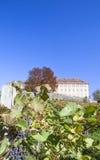 蓝色藤葡萄在城堡Stainz在施蒂里亚, Austr附近的葡萄园里 库存照片
