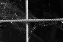 蓝色虚拟蜘蛛色彩万维网 免版税库存照片