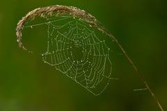 蓝色虚拟蜘蛛色彩万维网 免版税库存图片