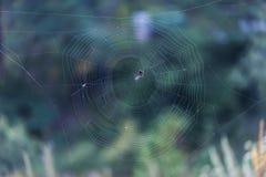 蓝色虚拟蜘蛛色彩万维网 库存照片