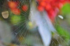 蓝色虚拟蜘蛛色彩万维网 库存图片
